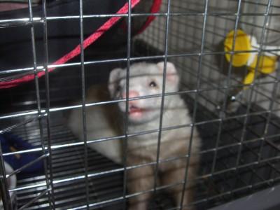 シェバ00 2009・04・11