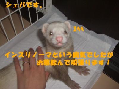 シェバ00 2009・04・14