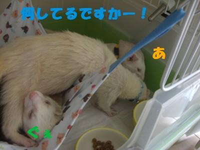 盗み食い02 2009・05・02