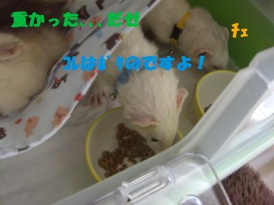 盗み食い03 2009・05・02