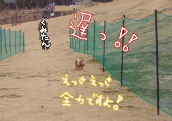 nisezennryokuyuna.jpg