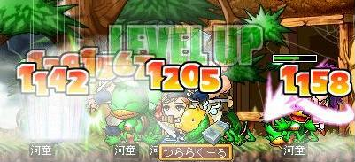 Maple0017_20080723170429.jpg