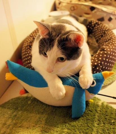 プラムとペンギン