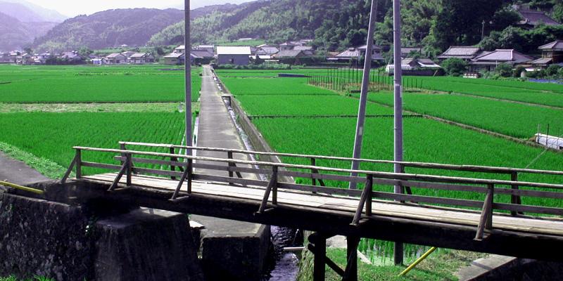 iwashina-kibashi.jpg