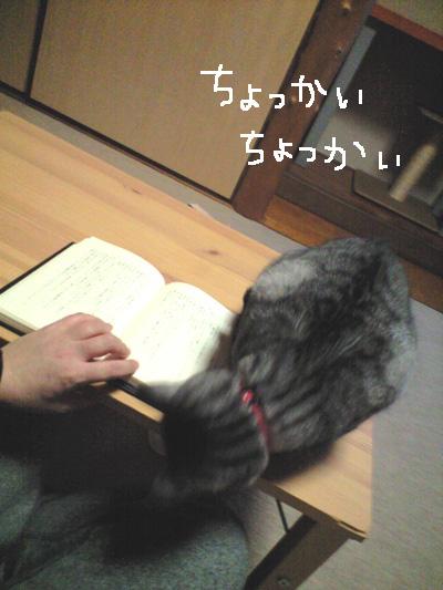 003_20081118141135.jpg