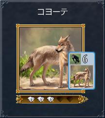 06_コヨーテ