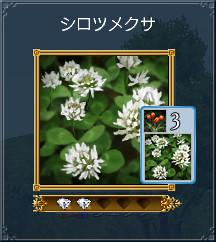 01_シロツメクサ