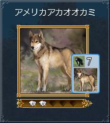 03_アメリカアカオオカミ