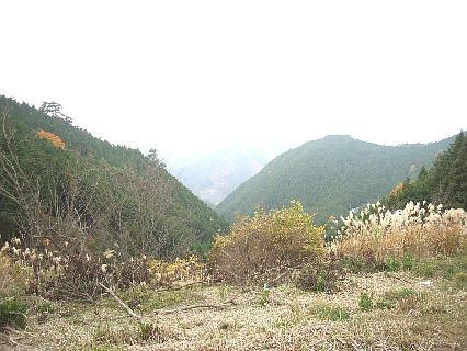 nisiawakuramori201117a.jpg