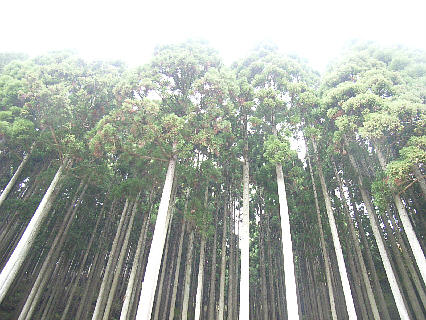 nisiawakuranomori201117a.jpg