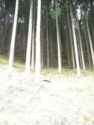 nisiawakuranomori201117b.jpg