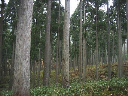 nisiawakuranomori201117d.jpg