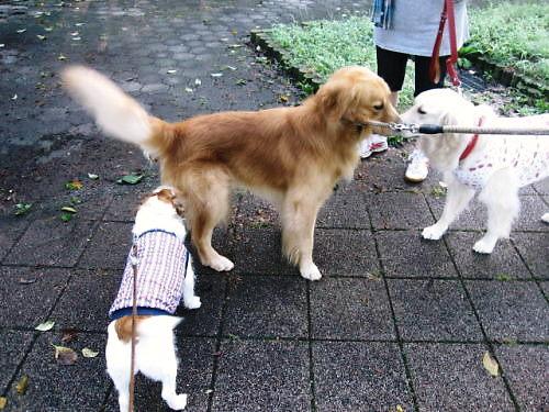 2011長岡公園740