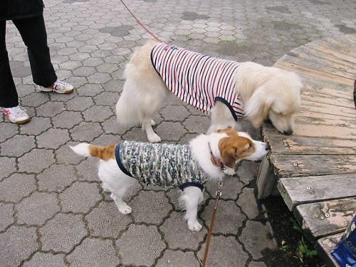 2011長岡公園753