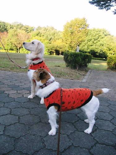 2011長岡公園760