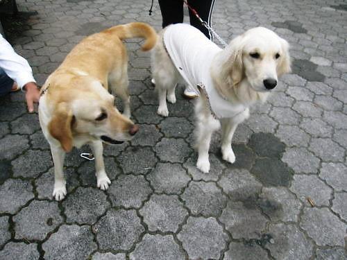 2011長岡公園766