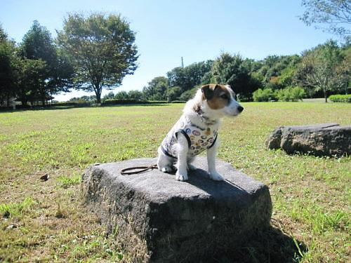 2011長岡公園781