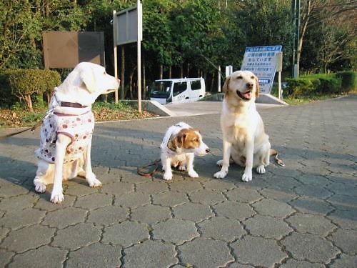 2011長岡公園790