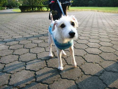 2011長岡公園791