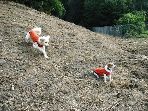 2011長岡公園832