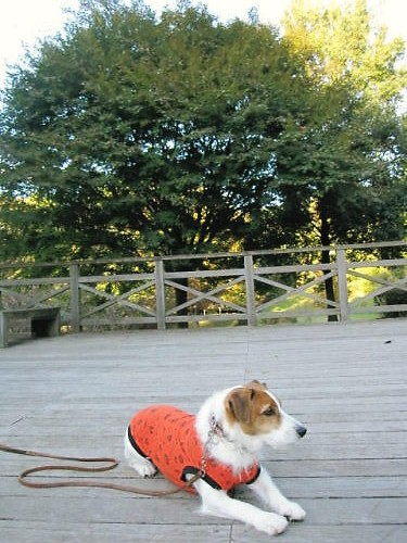 2011長岡公園840