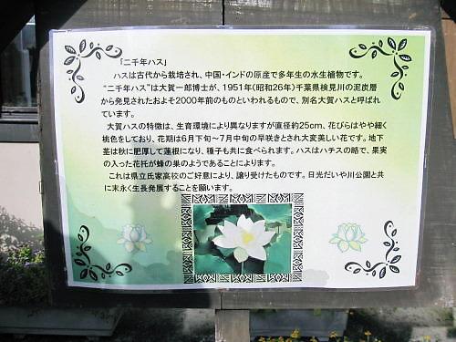 2011草木花034