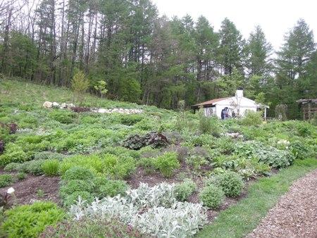 風のガーデン庭7
