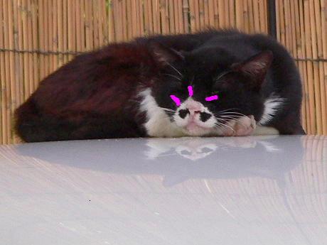 子顔の猫!?