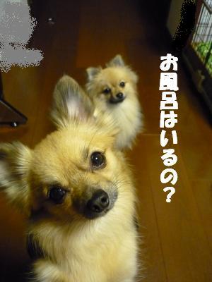 お風呂はいるの?