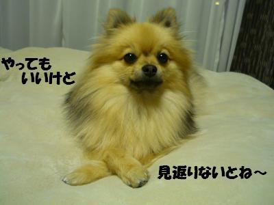 P1050073_convert_20090407005208.jpg