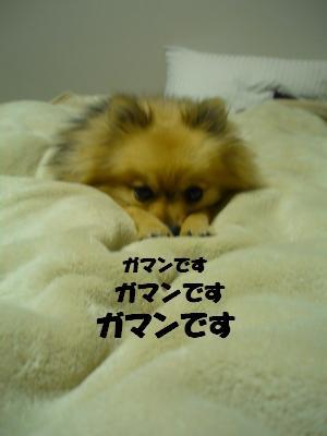 P1050177_convert_20090409011511.jpg