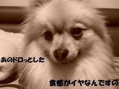 P1050312_convert_20090411210820.jpg