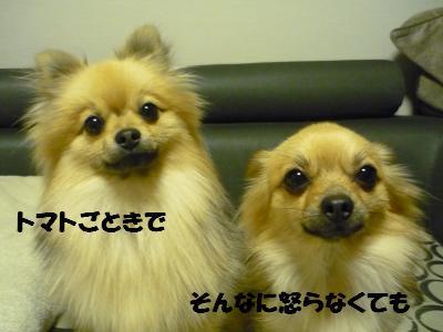 P1050315_convert_20090411210935.jpg