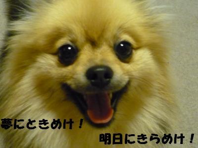 P1060959_convert_20090531171652.jpg