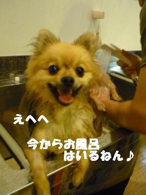 P1070247_convert_20090606003340.jpg