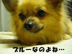 P1070809_convert_20090619181740.jpg