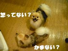 P1080135_convert_20090630130221.jpg