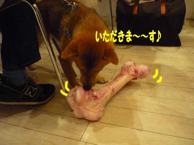 牛骨いただきま~す☆