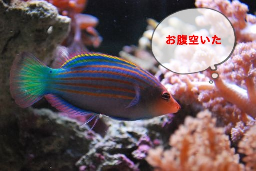 DSC_0051_512.jpg