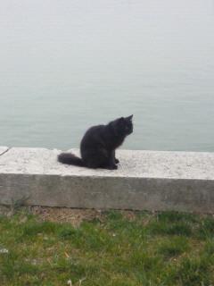 ブラーノ島の猫さん