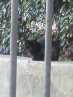 カルミネ教会近くの黒猫さん