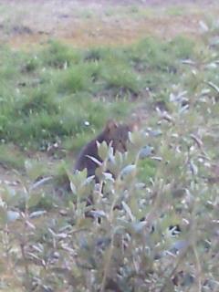 カルミネ教会近くの茶猫さん