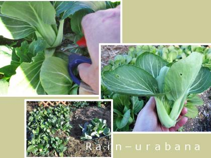 楽しい収穫 (^ ^V