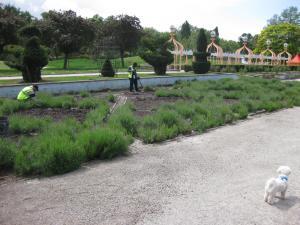 chelsea flower 1