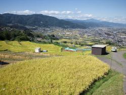 shibu201105.jpg