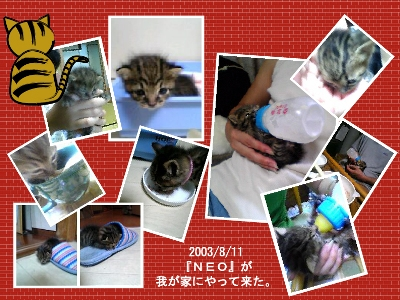 03-08-11-NEO-BS.jpg