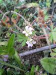 庭に咲いてた小さな花