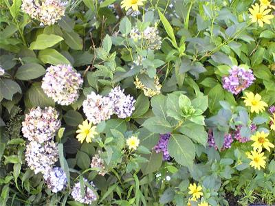 flower_20080731100154.jpg