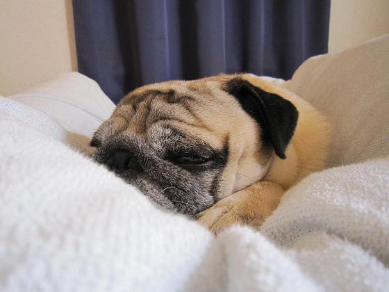 添い寝してくれてます。