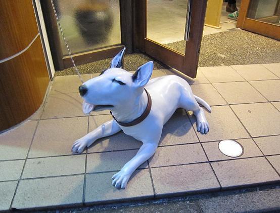 洋服屋さんの看板犬